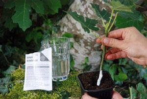 A quelle periode peut on planter un figuier - Quelles sont les plantes que l on peut bouturer ...