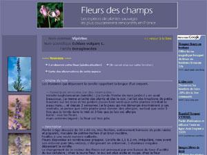 Fleurs-des-champs.com (D.R.) - http://www.fleurs-des-champs.com/