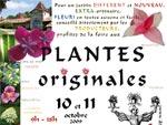 Vente-expo de plantes à Gaujacq