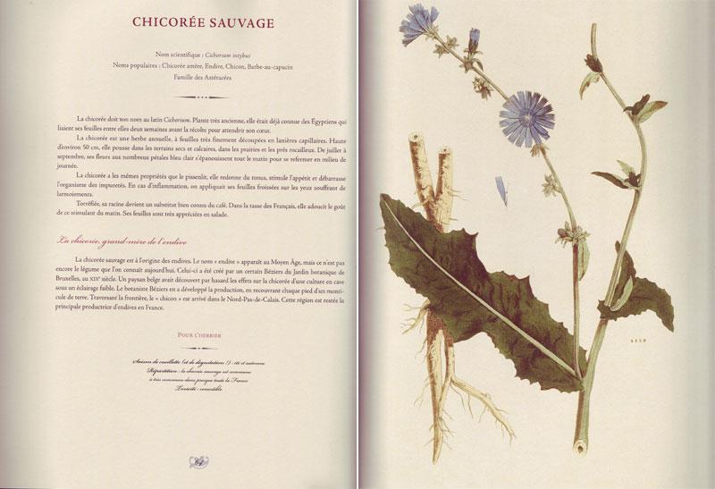 L\'herbier des jardins de curé - Livre de Jérôme GOUTIER et Yves ROBIC