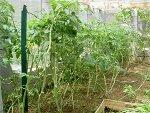 Le blog jardin d'Hubert