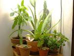 Cactées et plantes tropicales sous lampe