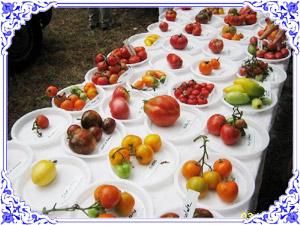 Jardins de tomates