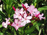 Adoptez les plantes méditerranéennes