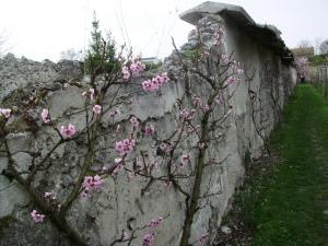 Mur à pêches - D.R. - http://mursapeches.wordpress.com/