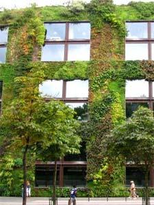 Un mini mur végétal dans un cadre