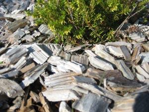 Paillis végétal de copeaux de pin