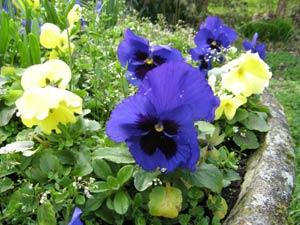 Jardinage en juillet: entretien des fleurs, fenêtre et balcon