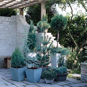 Plantes de caractère pour jardin à forte personnalité