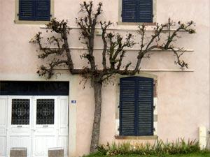 Poiriers de façade