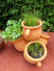 En hiver, cultivez vos herbes aromatiques à l'intérieur