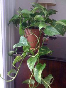 En novembre, les plantes dépolluantes sont à l'honneur chez Botanic et Jardiland