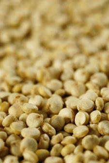 Quinoa : une pseudo-céréale excellente pour la santé