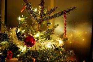 Un sapin de Noël naturel... presque bio