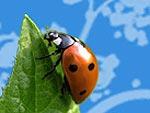 Une France sans pesticides du 20 au 30 mars