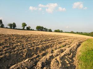 Sillons dans un champ cultivé