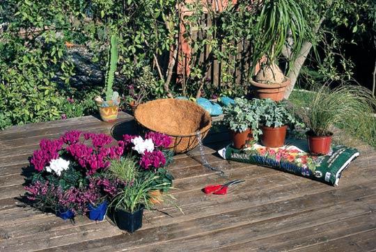 plantes et accessoires pour réaliser la suspension