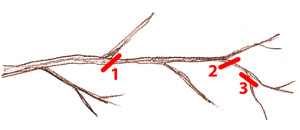 Simplification des branches