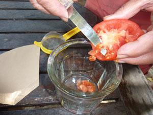 extraction des pépins de tomate