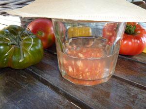 graines de tomate dans le bocal rempli d'eau