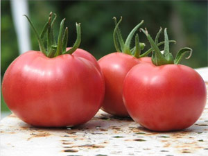 Les variétés de tomates rouges
