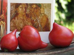 Tomate Téton de Vénus