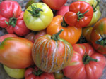 A la re-découverte des tomates anciennes
