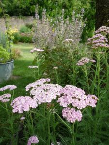 plantes mellifères