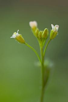 Secrets de plantes : Arte dévoile les propriétés insoupçonnées de 4 plantes