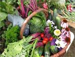 Association des Jardins Ouvriers de Sélestat