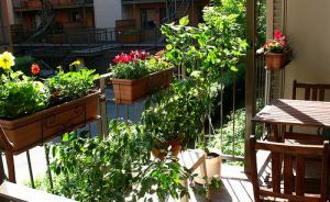 Fleurs et potager de balcon