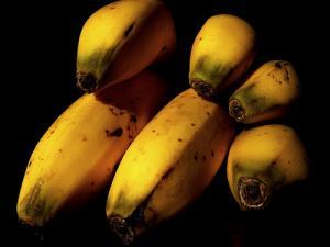 Après les OGM, des plantes génétiquement modifiées... par irradiation