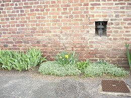 Embellissons nos murs - Rennes