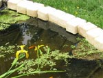 Rénover un bassin de jardin