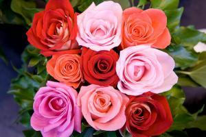 Les Fleur Rouge D Amour Langage Des Roses Selon Les Couleurs Vap Vap