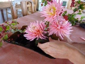 installation des fleurs de dahlias