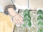 Bouturage de feuilles