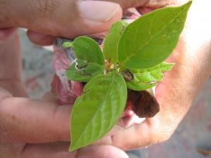 Troc aux plantes : échangez, récupérez, sans rien débourser !