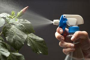Brumiser la plante atteinte