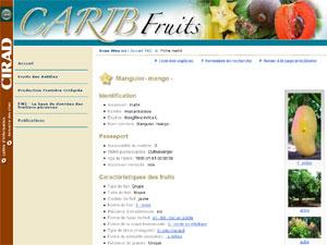 CaribFruits - D.R. CIRAD - http://caribfruits.cirad.fr/