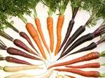 Vous avez dit orange les carottes ?