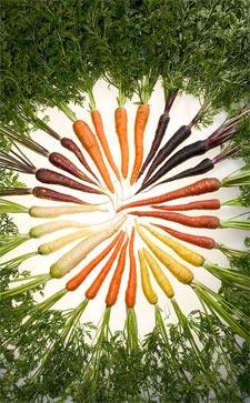 Différentes variétés de carottes de couleur