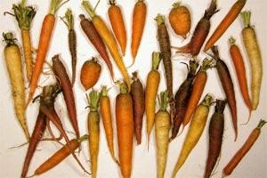 Diversite des couleurs et formes de carottes