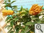 Fruitiers méditerranéens : les classiques... et les moins connus !