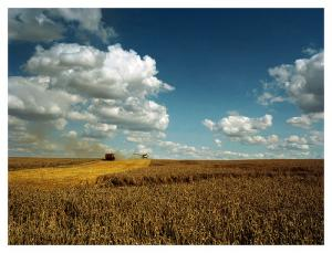 Agriculture bio : suffirait-elle à nourrir la planète ?