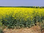 Réduire de 50% les pesticides agricoles, c'est possible !