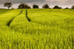 A-t-on vraiment besoin des OGM pour nourrir l'humanité ?