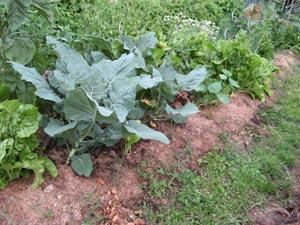 Conserver les récoltes du potager et du verger
