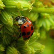 Quand les espaces verts municipaux passent à la lutte biologique