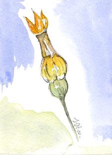 Ligature de la fleur de courgette